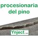 Ynject Go mini (pinos)