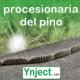 ynject procesionaria del pino