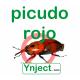 picudo rojo