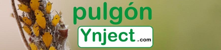 Pulgón